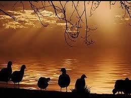 loreena the golden key:ducks